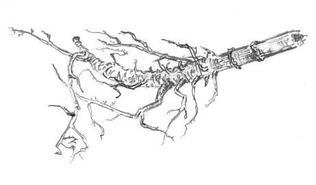 Ločidlo čertovo lejno